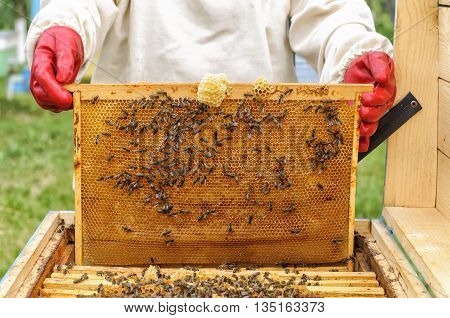 Beekeeper controlling beehive and comb frame beekeeping
