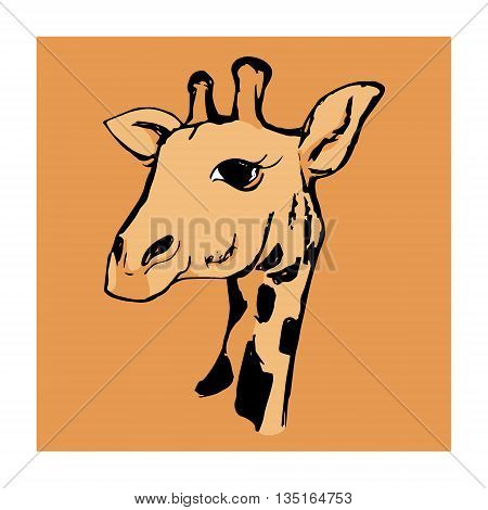 Graphic image of a head of a giraffe on a white background. Drawing a giraffe vector illustration