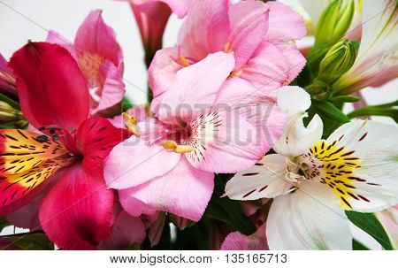 Bouquet Of Alstroemeria Flowers