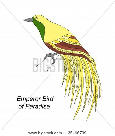 Tropical bird Emperor Bird of Paradise hand draw on a white background.