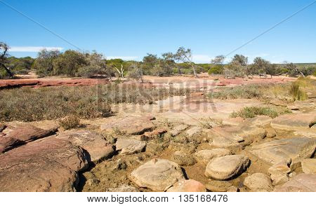 Red sandstone and native flora in the bushland landscape on the Murchison River banks in Kalbarri, Western Australia under a clear blue sky.