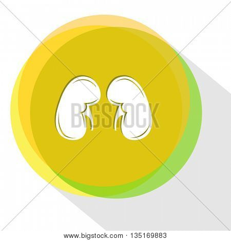 kidneys. Internet template. Vector icon.