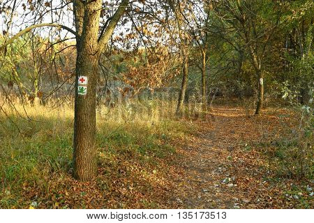 Hiking trail signs in the forest