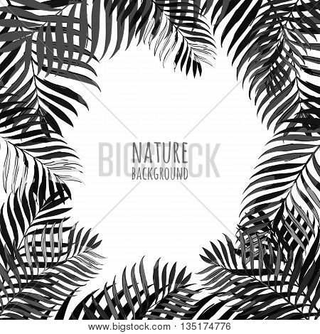 Vector Frame With Coconut Palm Leaves On White Background. Floral Background With Tropical Leaves. A