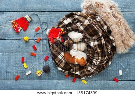 Kittens and mittens top view, flat lay. White, Red and grey newborn kittens in plaid blanket. Sweet tiny kittens on a serenity blue wood sleeping with mittens. Funny kittens crawling and meowing