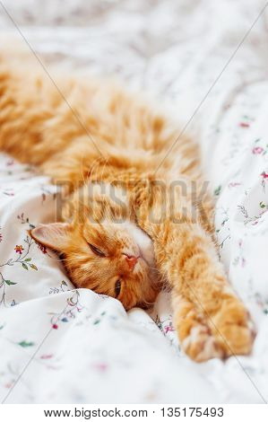 Cute ginger cat lying in bed. Fluffy pet looks sleepy. Cozy home background. Place for text.