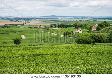 Vineyard landscape in France