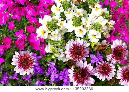 Closeup Of Vibrant Blossoms Of Garden Flowers.