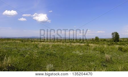 Beautiful green spring steppe and wonderful blue sky