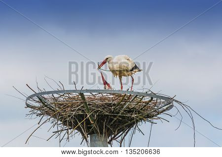 Close up, two storks on the nest