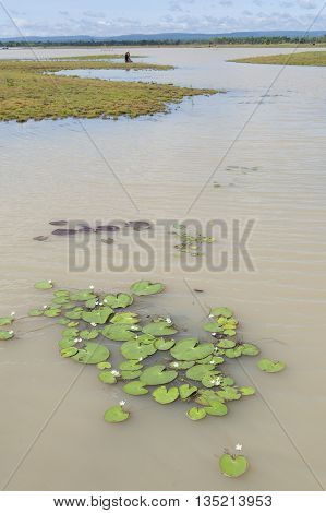 Muddy Silt Filled Flood Waters After Tropical Storm Asia, Showing Sudden Increase In Water Level And