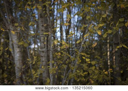 Autumn Forest Detail Wallpaper