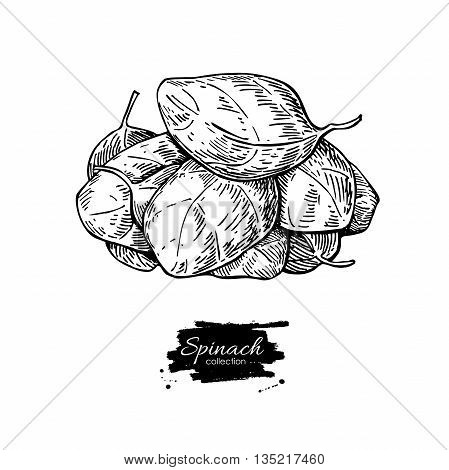 Spinach leaves heap hand drawn vector illustration. Isolated Spinach leaves drawing on white background. Vegetable engraved style illustration. Detailed botanical drawing. Farm market product