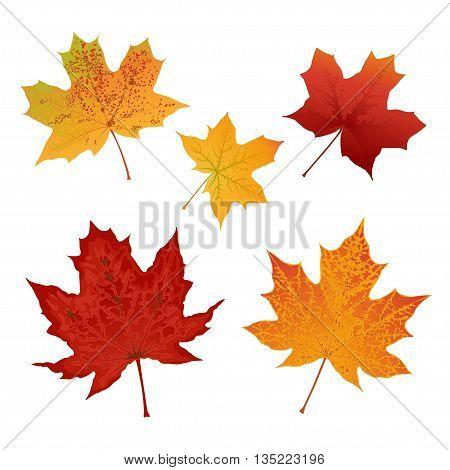 Autumn colored maple leaves set vector illustration