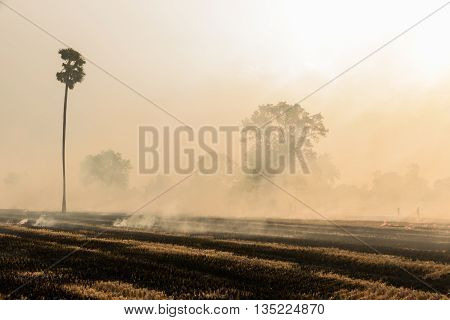 Burning Rice Straw