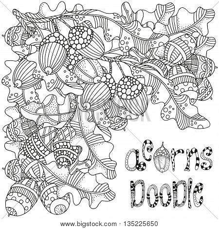 Acorn doodle. Artistically hand drawn acorns and oak leaves in vector. Ethnic, floral, doodle, zentangle, tribal design elements. Black and white. Made by trace from sketch.