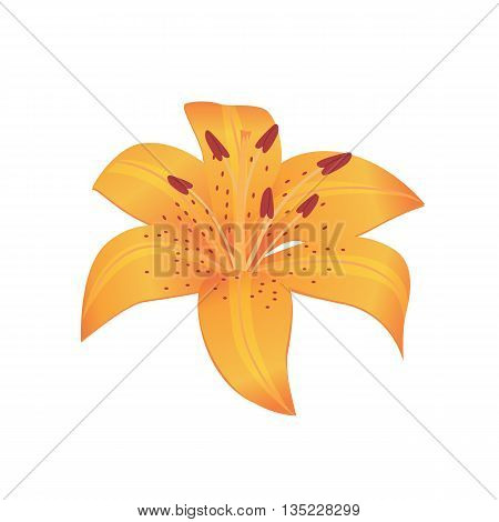 Beauty flower design flat style isolated. Blooming orange flower with big beautiful petals, summer or spring nature floral plant and graphic blossom exotic natural flora, vector illustration