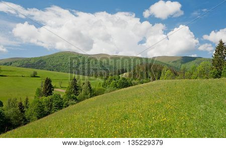 Green mountains with spruce tree forest under white clouds. Beautiful rural landscape with blue sky