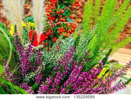 Heather ornamental grasses fire thorn in the arrangement