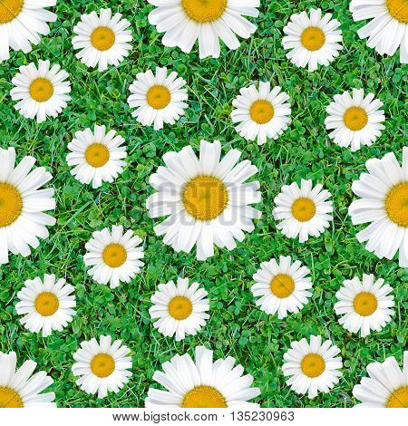 Daisy flowers seamless pattern on natural green grass background