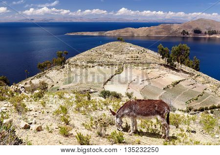 South America Bolivia - Isla del Sol on the Titicaca lake the largest highaltitude lake in the world