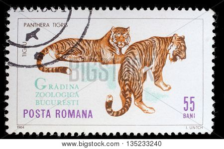 ZAGREB, CROATIA - JULY 18: A stamp printed by Romania, shows tiger, circa 1964, on July 18, 2012, Zagreb, Croatia