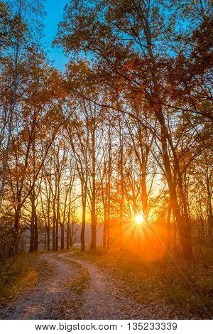 Winding Countryside Road Path Walkway Through Autumn Forest. Sunset Sunrise. Nobody. Road Turns To Rising Sun.