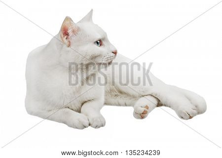 white cat on a white background with clipping patch