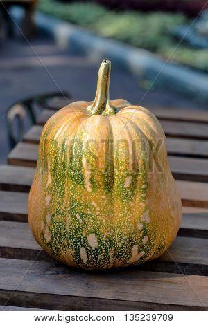 Ripe orange pumpkin vegetable on a table