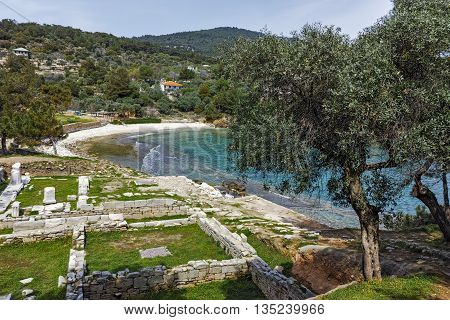 Panorama and olive tree to Archaeological site of Aliki, Thassos island,  East Macedonia and Thrace, Greece