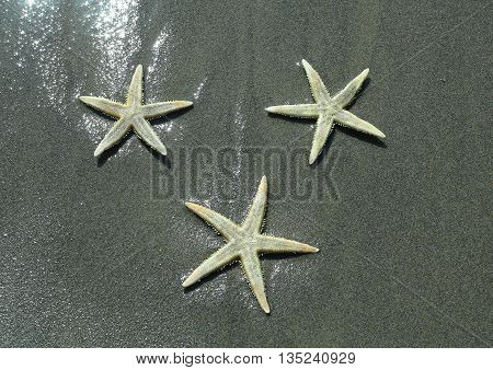 three starfish with five toes on the shore of the ocean