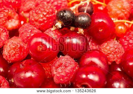 Closeup Of Red Fruit