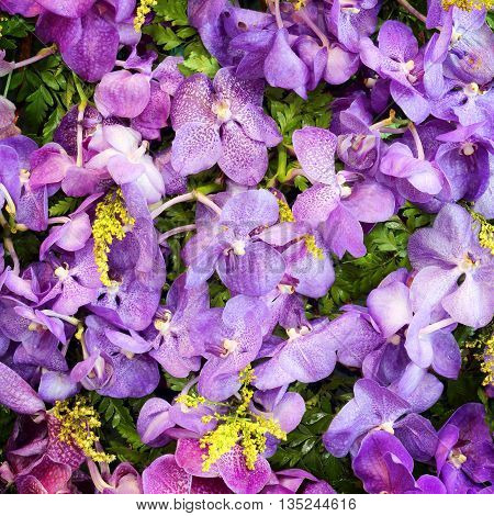 Purple flowers in the garden for background.