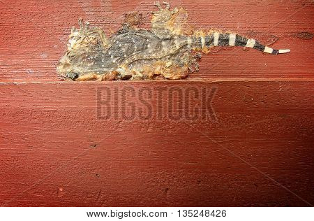 Close up dead and dried gecko on dirty wooden plank