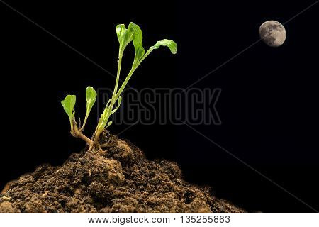Young plant on the cracked land under the moonlight background.