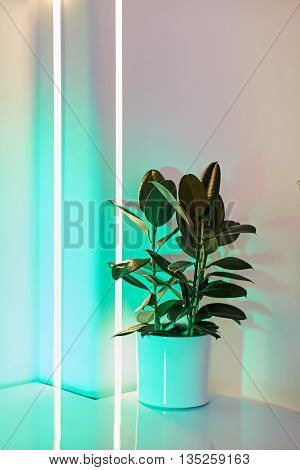 Green plant in the White work space