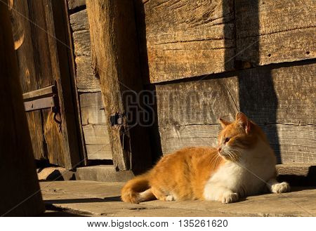 Photo Red Cat Sitting On A Porch