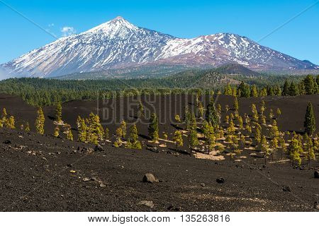 Volcano Teide National Park Tenerife Canary Islands