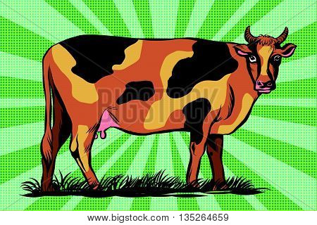 Color spotted farm cow pop art retro vector. Agriculture meat and dairy industry