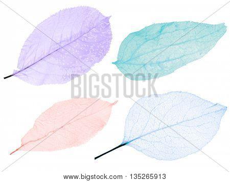 set of leaf skeletons isolated on white background