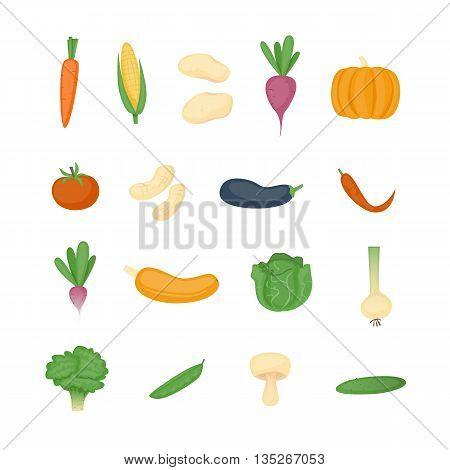 Vegetables Healthy eating. Cabbage, beets, carrots, onions, cucumber, pumpkin, pepper, mushroom, peas, broccoli. Flat design vector illustration.