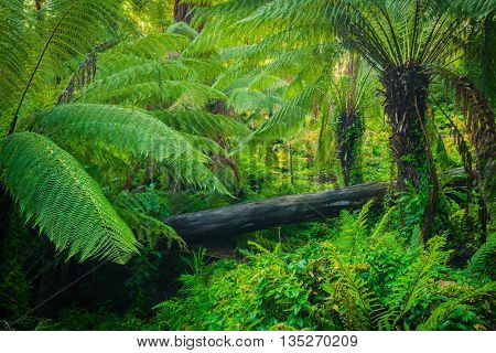 Beautiful lush palms growing wild