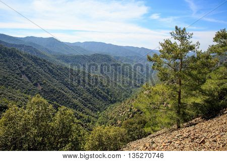 Landscape with pine tree on mountain valley slope, Cyprus