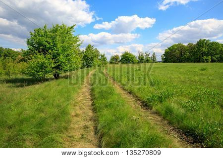 scene with rural road in steppe among green grass