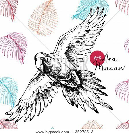 Vector hand drawn illustration of ara macaw parrot. Engraved vintage style exotic bird collection decorated with palm leaves. Wild animals portrait.