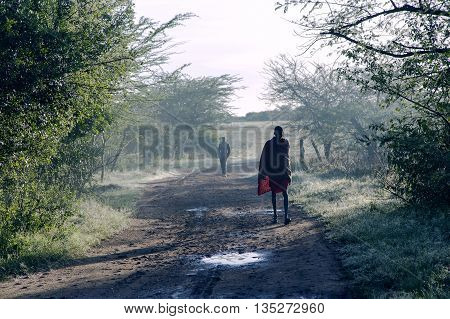 AFRICA, KENYA, MAY, 05, 2016 - At sunrise Maasai Mara tribe men go to pasture the herds in the field in Maasai Mara National Park, Kenya