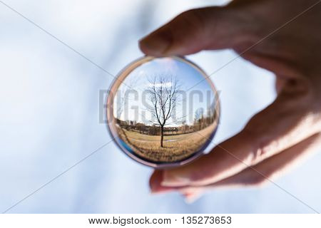 nature in Crystal Ball