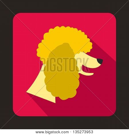 Poodle dog icon in flat style with long shadow. Animals symbol