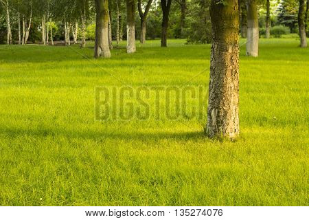 Summer lawn bright background. Sunny forest landscape.