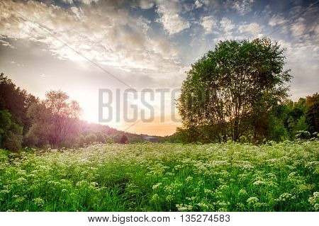 spring landscape with wildflowers and trees beautiful sunset.